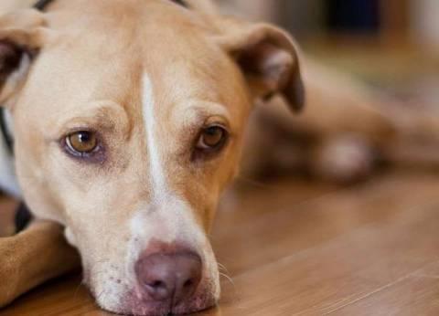 بينهم 15 طفلا.. كلب مسعور يعقر 17 شخصا في أسيوط