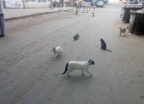 في الطالبية.. غاب الناخبون فتزاحمت القطط أمام اللجان