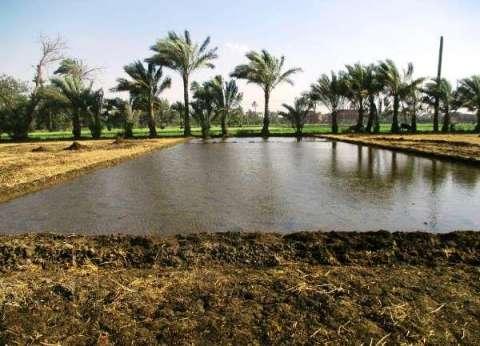 """""""الري"""": إزالة 8 أفدنة زراعات أرز مخالفة في الإسماعيلية"""
