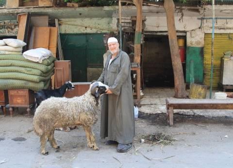 جزار يستقبل عيد الأضحى بـ6 خرفان «قِسط»: اللحمة غالية ومحدش بيشترى