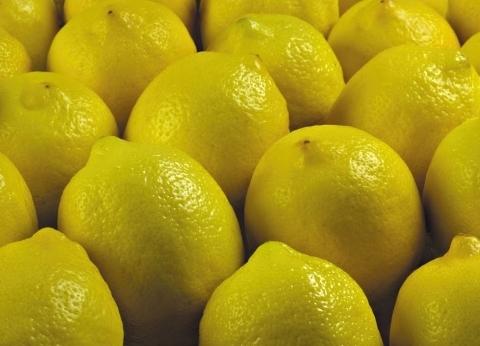 الجنون يضرب أسعار «الليمون» قبل شم النسيم فى الإسكندرية