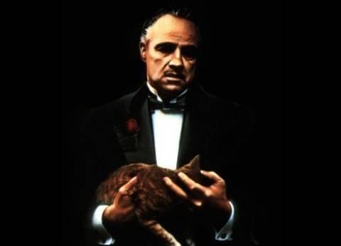 قطة quotThe Godfatherquot وأخطاء quotArmageddonquot.. كواليس أشهر أفلام هوليوود