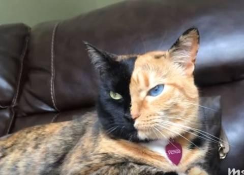 بالفيديو  تعرف على أشهر 10 قطط على مواقع التواصل الاجتماعي