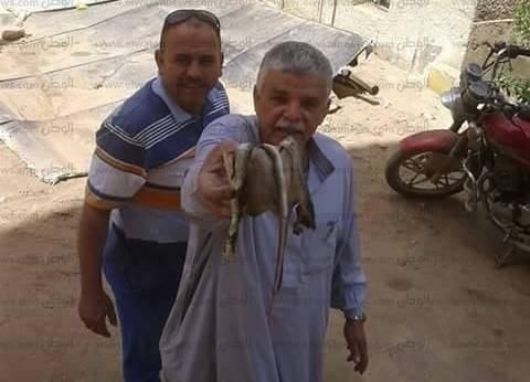 ثعبان يهاجم موظفي الوحدة المحيلة لمدينة الفشن ببني سويف