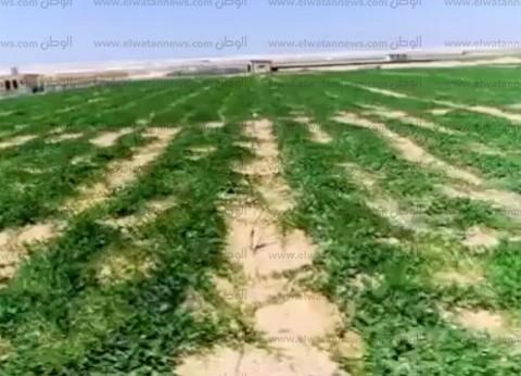 خبير: الحرب التجارية رفعت حاجة الصين للخضراوات والفاكهة المصرية