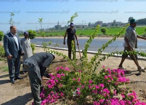 """تكثيف """"الري المبكر"""" للمسطحات الخضراء ببرج العرب حفاظا على الجذور"""