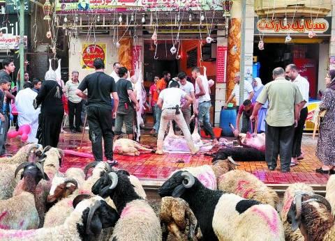 """""""الزراعة"""" تطرح 2775 رأسا من الأضاحي بـ57 جنيها للكيلو القائم"""