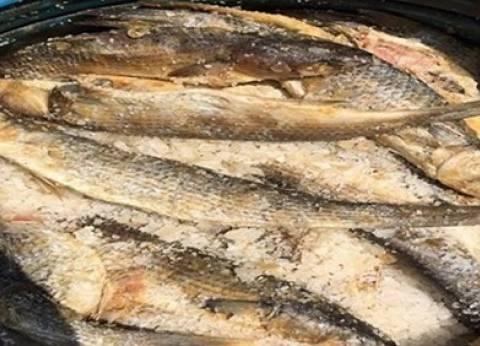 """""""بيطري أسيوط"""" تضبط 2.7 طن أسماك مملحة فاسدة"""
