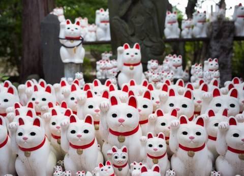 في اليابان.. قطط quotمانيكي نيكوquot تجلب الحظ والحب والمال