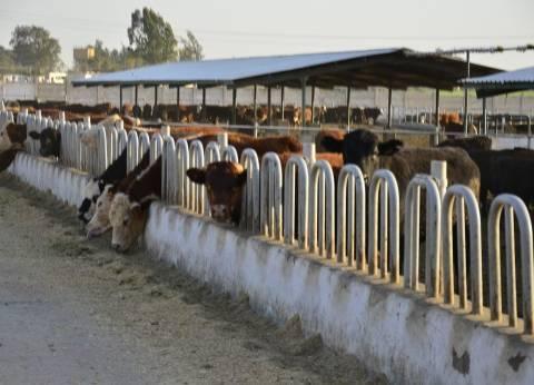 استياء بين مربي الماشية بالفيوم بسبب تأخير صرف القروض الإنمائية