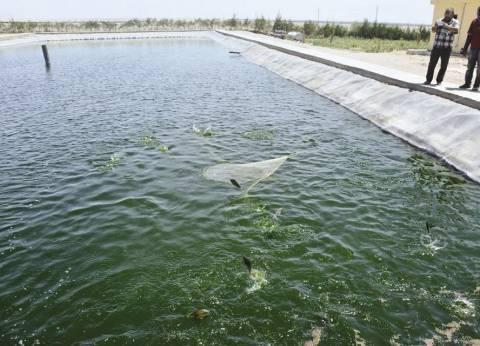 دور التسويق فى تطوير صناعة الاستزراع السمكى فى مصر
