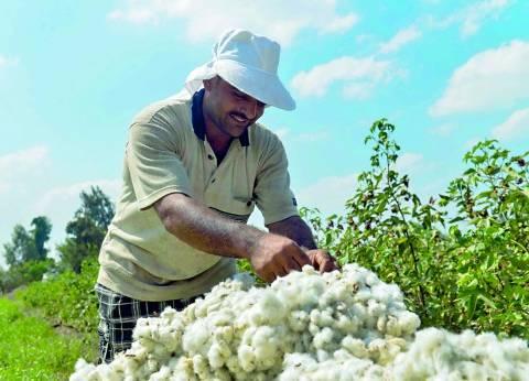 """""""معلومات مناخ وزارة الزراعة"""" يحذر من انتشار دودة القطن"""