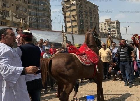 بالصور| وصلة رقص بالخيول أمام لجان التصويت في باب الشعرية
