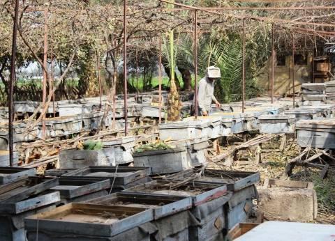 «صناعة النحل» ضحية جديدة لأزمة السكر