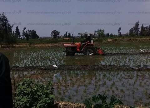 قبل بدء مشروع بحثي مع الصين.. أنواع الأرز الموفرة للمياه في مصر