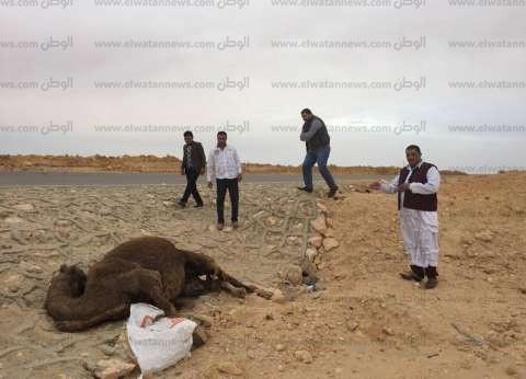 """""""المصريين الأحرار"""" بمطروح يبحث أزمة حوادث الطرق على طريق الضبعة"""