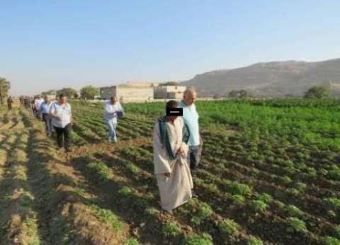 إعدام 11 مزرعة بانجو على مساحة 6 أفدنة في جنوب سيناء