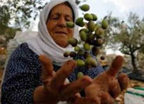 فلسطينيون يزرعون شتلات الزيتون بالقرب من حدود غزة