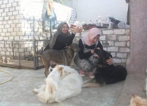 متطوعون فى ملاجئ رعاية الحيوانات الأليفة: نحن مأوى من لا مأوى له