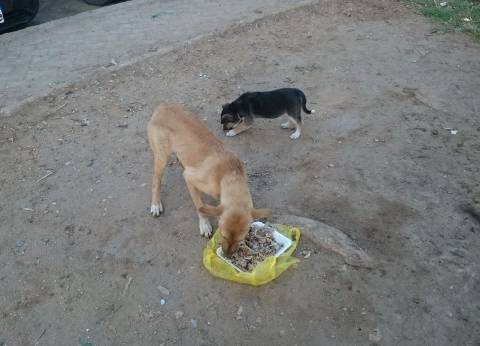 إعدام 3655 كلب ضال وسحب عينات 28 مزرعة بشأن انفلونزا الطيور في الجيزة