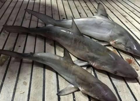 إحالة صاحب مركب للنيابة لاصطياد أسماك قرش في البحر الأحمر