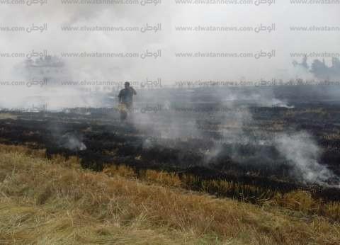 """رئيس """"شؤون البيئة"""" بالدلتا: خطة عاجلة لمواجهة حرق قش الأرز والسحابة السوداء"""