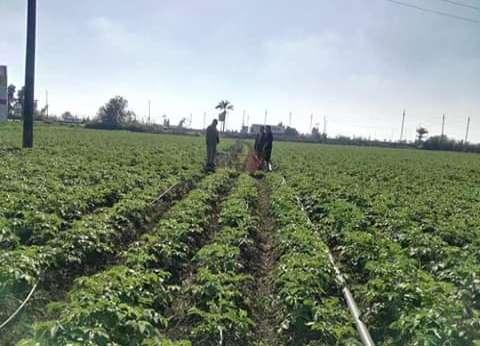 """""""زراعة دمياط"""" للمزارعين: التزموا بالتعليمات الطقس السيئ يتلف المحاصيل"""