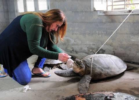 """""""إسكندرية لإنقاذ الحياة البرية"""" ينظف الشواطئ من الأكياس البلاستيكية"""