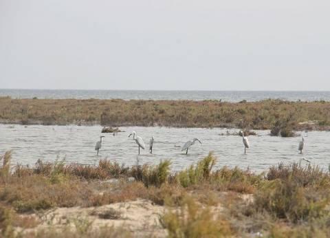 غدا.. انطلاق 1228 مركب صيد لاستئناف العمل ببحيرة البردويل شمال سيناء
