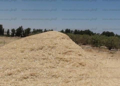 """وكيل """"الزراعة"""" بجنوب سيناء: نسعى لتحويل المحافظة إلى """"سلة غذائية"""" للقمح"""