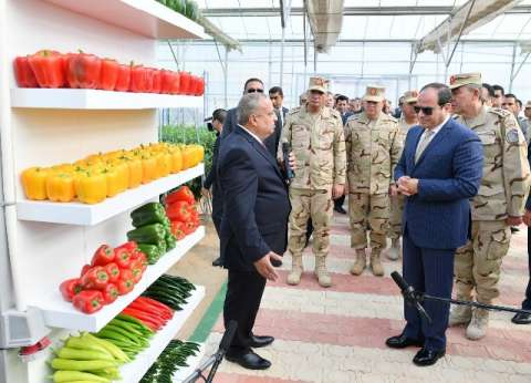 الزراعة: الصوب الزراعية من أهم المشاريع في مصر