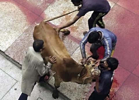 ضرب وسحل وتعذيب.. جرائم إنسانية ضد الأضاحي