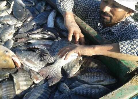 افتتاح موسم الصيد في مزرعة الهيئة السمكية ببحيرة المنزلة