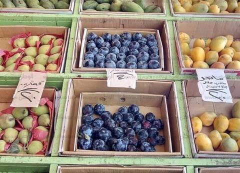 """رئيس """"تجارية الفيوم"""": استغلال تجار التجزئة وراء ارتفاع أسعار الفاكهة"""