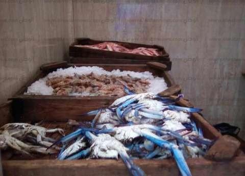 """""""مقاطعة الأسماك"""" مستمرة في دمياط.. وطلب إحاطة بـ""""النواب"""" لوقف التصدير"""