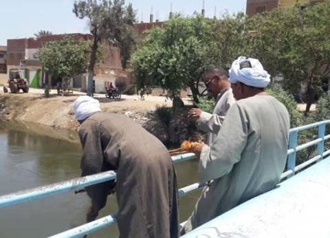 تطهير البحر اليوسفي من الحشائش لوصول مياه الري للزراعات في المنيا