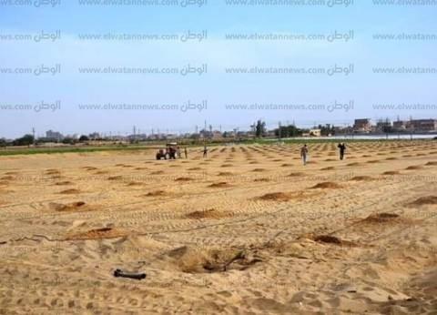 محافظ الإسماعيلية: زراعة 16 فدانا بأشجار الزيتون في مشروع مزرعة السلام