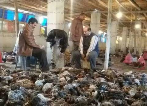"""ظهور جيل جديد من إنفلونزا الطيور في الدقهلية.. وخبراء يلومون """"الزراعة"""""""