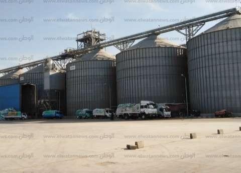 توريد 546 ألف طن و115 كيلو جرام من محصول القمح بالفيوم