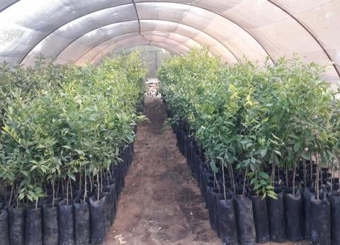 محافظ الوادي الجديد يوجه بحصر الأراضي المخصصة للصوب الزراعية