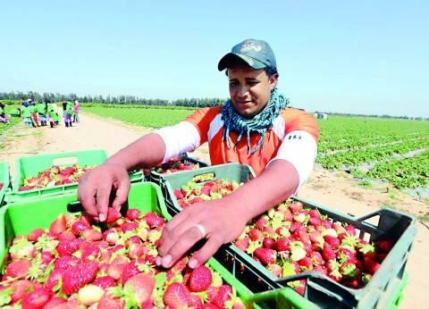 السعودية تحظر دخول الفراولة المصرية