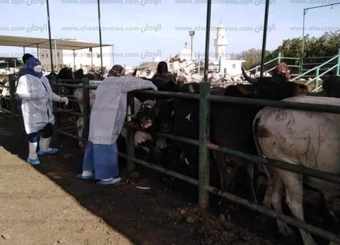 تحصين 1000 رأس عجول سودانية لدى وصولها البحر الأحمر