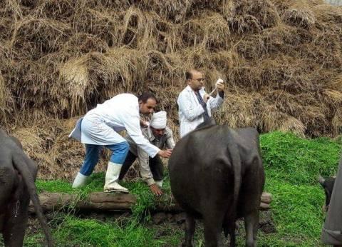 """""""بيطري دمياط"""" يواصل حملاته لتطعيم المواشي ضد الحمى القلاعية"""