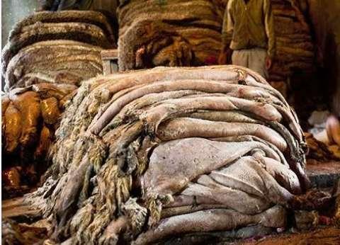"""""""الجلد العقدي"""" يرفع أسعار الجلود 20%.. ومخاوف من تراجع التصدير"""