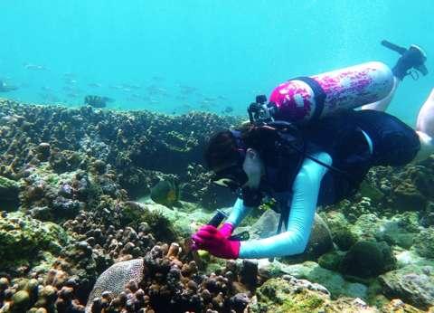 الشعاب المرجانية تتحدى المناخ في الخليج العربي