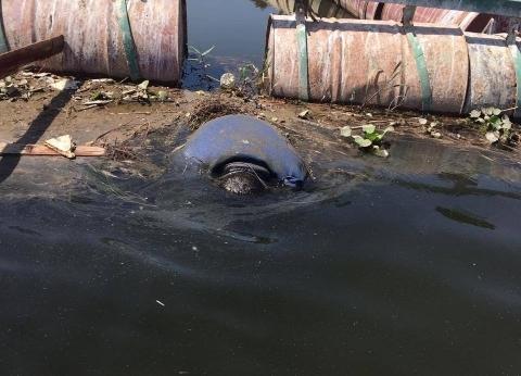 انتشال جثة غريق من نهر النيل في القناطر