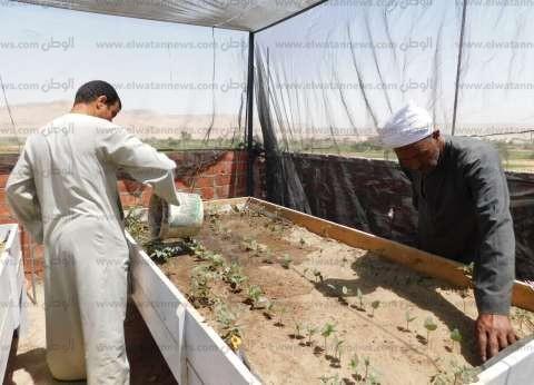 أسطح منازل «أولاد يحيى» مزروعة.. والأهالى: منتجاتنا بلا مبيدات