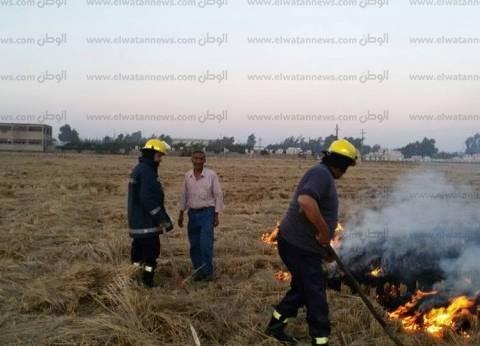 تحرير 1485 محضر حرق قش أرز في كفر الشيخ