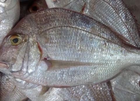 أسعار الأسماك اليوم الأربعاء 9/ 1/ 2018.. والبلطي بـ23 جنيها
