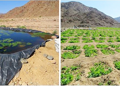 «مكافحة المخدرات» تبيد 518 مزرعة «قنب وخشخاش» في جنوب سيناء